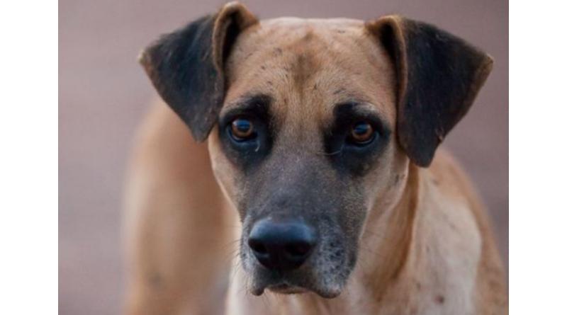 Paraguaçu terá lei para manejo humanitário de cães e gatos