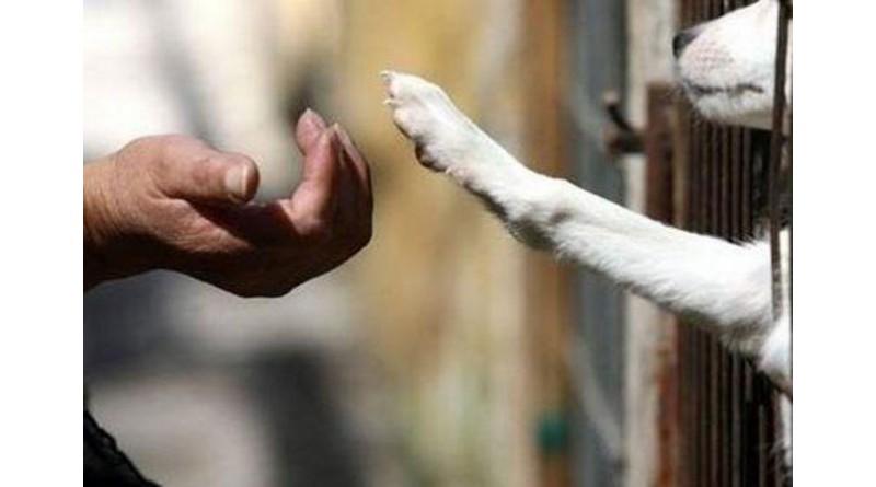 Abril Laranja é dedicado ao animal de rua
