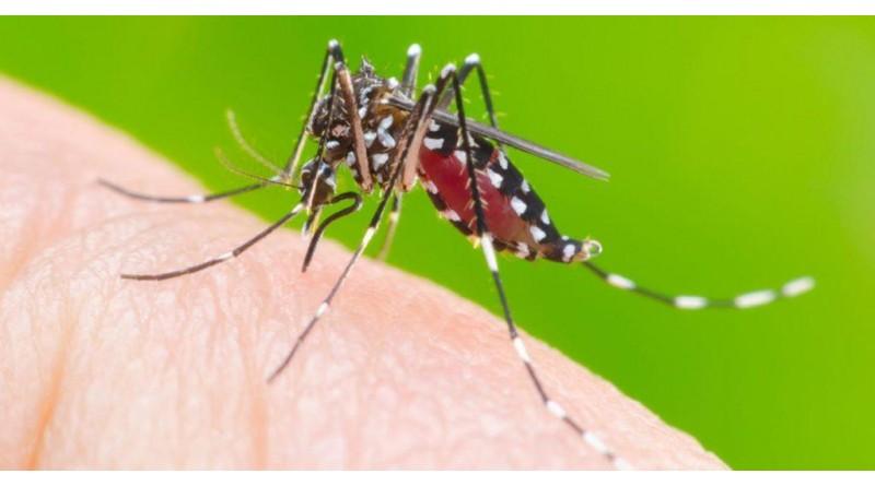 Assis tem 972 casos confirmados de dengue em 2019