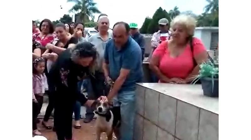 Cachorro se despede da dona no cemitério em Paraguaçu Paulista