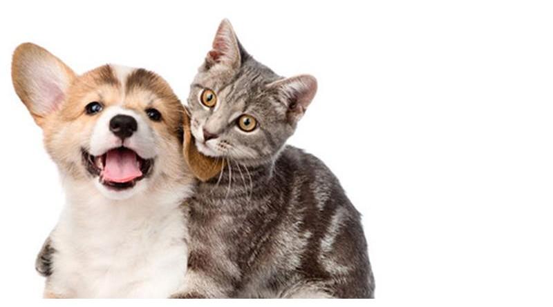 Moradores das Vilas Priant e Humberto Soncine podem cadastrar cães e gatos para castração