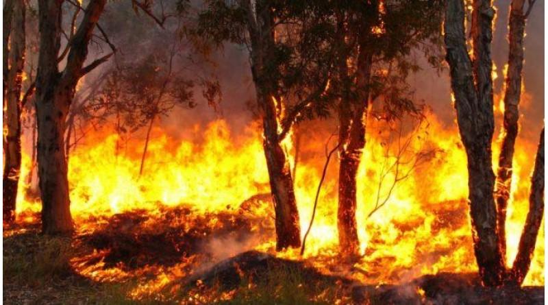 Governo decide proibir queimadas em todo o Brasil no período da seca