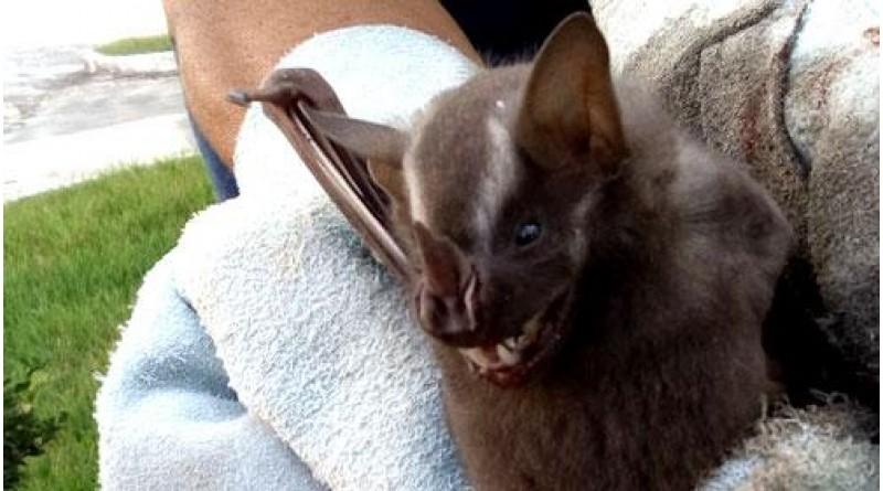 Segundo caso de morcego com raiva é confirmado em Botucatu