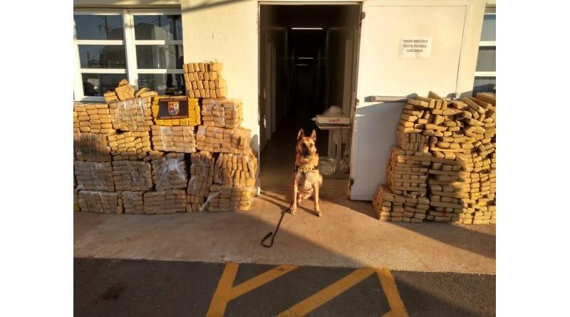Cão da PM encontra cerda de duas toneladas de drogas escondida em caminhão no Posto Palmital
