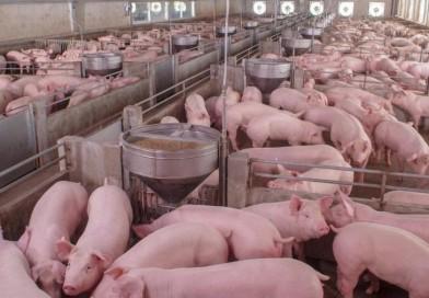 Frango e porco também sobem, e preço não será como antes, diz associação