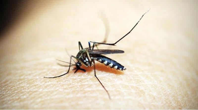 Quatá tem mais de 60 casos suspeitos de dengue em 2020
