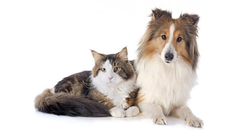 Cadastramento para castração de animais será de 3 a 6 de março