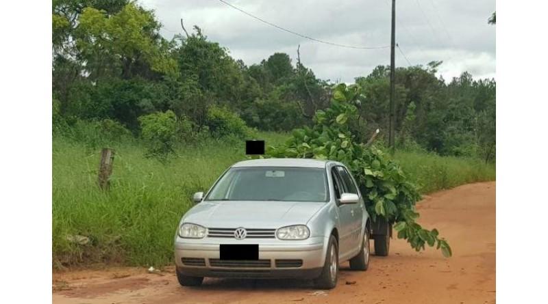 Meio Ambiente recebe denúncia e notifica morador por descarte irregular de poda de árvore