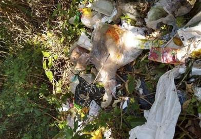 Meio Ambiente de Paraguaçu registra descarte irregular de lixo por morador de outro município