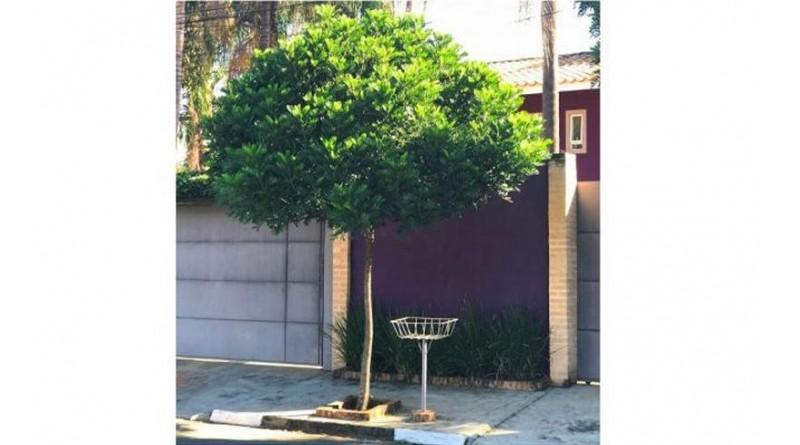 Prefeitura de Paraguaçu fornece mudas para arborização urbana e para áreas verdes