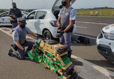 Polícia Rodoviária apreende tijolos de maconha em fiscalizações em Paraguaçu Paulista