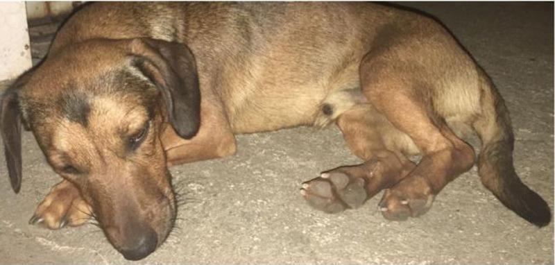 Cachorro é atropelado, recebe cuidados e aguarda o dono