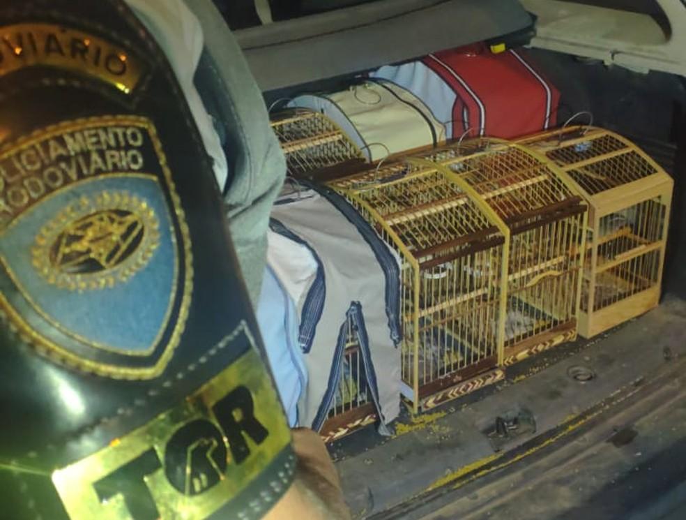 Polícia resgata pássaros silvestres encontrados em gaiolas no porta-malas de carro em Paraguaçu